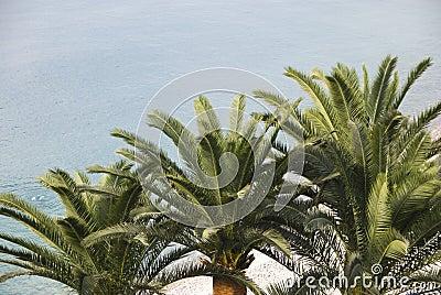 Three palm trees on beach