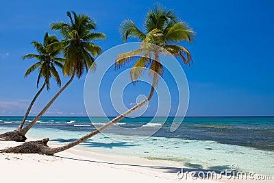 Three palms on the beach island