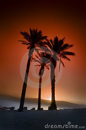 Three palms sunrise
