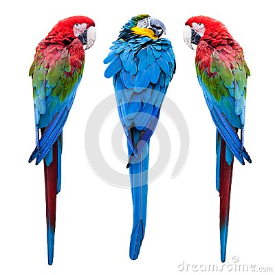 Free Three Parrots Stock Photos - 123942303