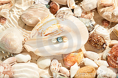 Three pearls in big seashell underwater