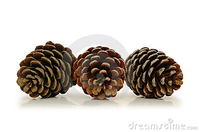 Three pine cones