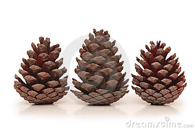 Three pine cones isolated