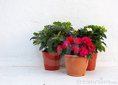 Three pots of flowers at a white wall