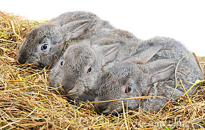 Three pretty bunny