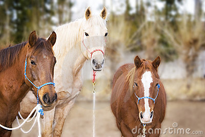 Three Pretty Horses