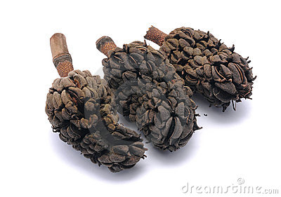 Three Prunus Laurocerasus seeds