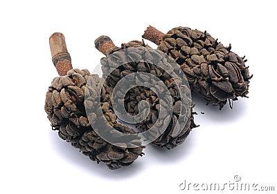 Three Prunus Laurocerasus seeds
