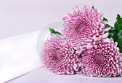 Three purple chrysanthemums and postcard