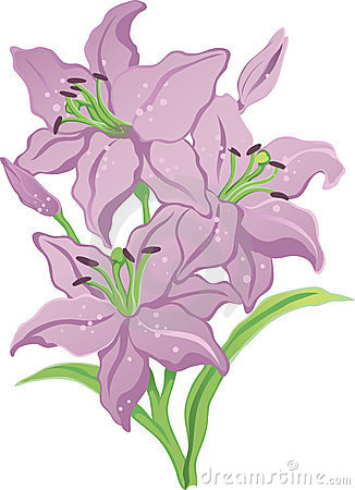 Three purple lilies