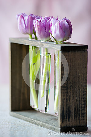 Three purple tulips in a small  glass