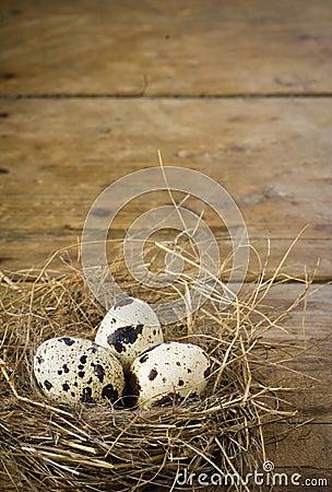 Three quail eggs in the nest