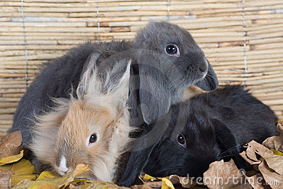 Three rabbits with leafs