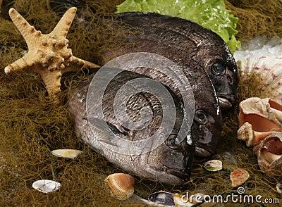Three raw fish