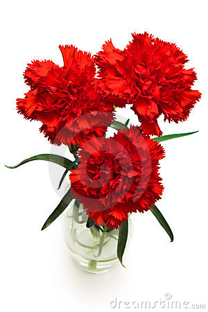 Free Three Red Carnations Stock Images - 4401874