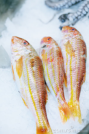 Three red fishes in ice