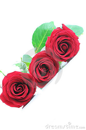 Three red roses angled on white