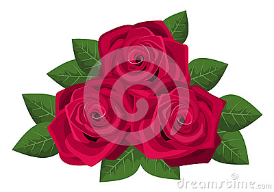 Three red roses isolated on a white background.