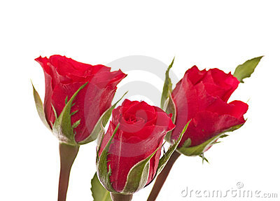 Three rose, isolated