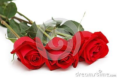 Three roses isolated