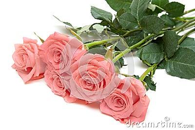 Three roses lies