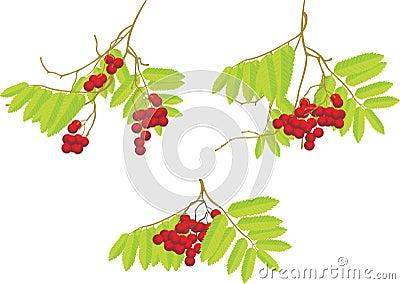 Three rowan branches