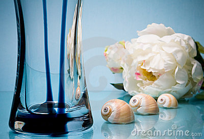 Three seashells with glass vase on blue