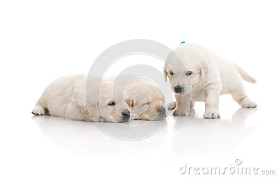 Three small cute dog puppy