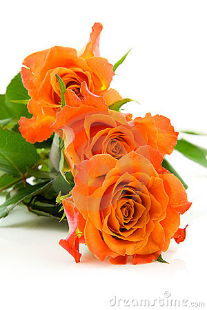 Three stacked orange roses