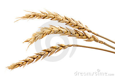 Three stands of wheat