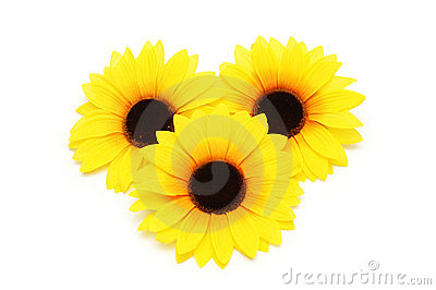 Three sunflowers isolated