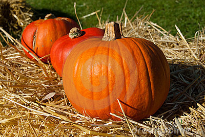 Three sunlit pumpkins in a row