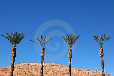 Three tall palm trees in the desert
