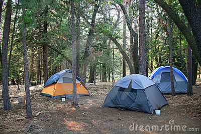 Three Tents Set up in the Lush Green Woods