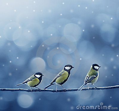 Free Three Titmouse Birds In Winter Stock Photos - 22335563