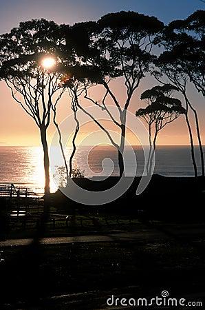 Three tree sunrise