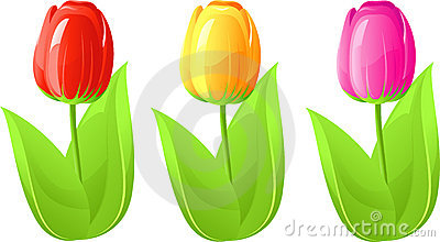 Three tulip