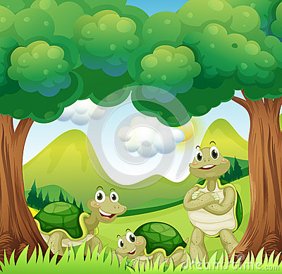 Three turtles in the woods
