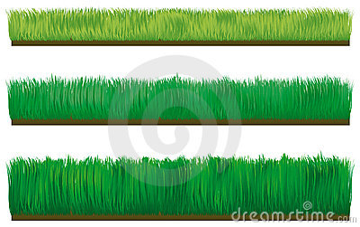 Three types of border grass