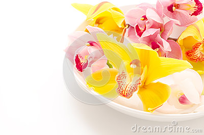Three types of orchid on plate