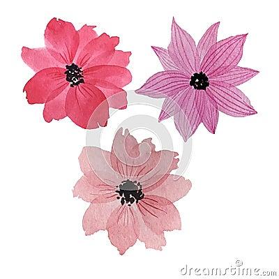 Three watercolor flowers Stock Photo
