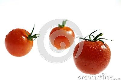 Three wet Cherry tomatos