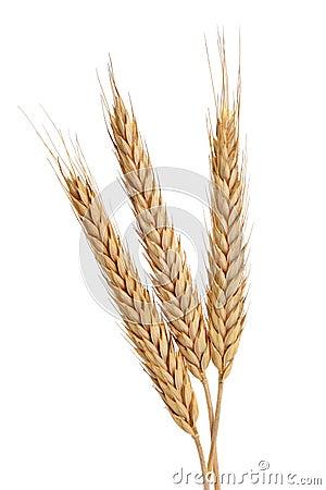 Free Three Wheat Stock Image - 26571771