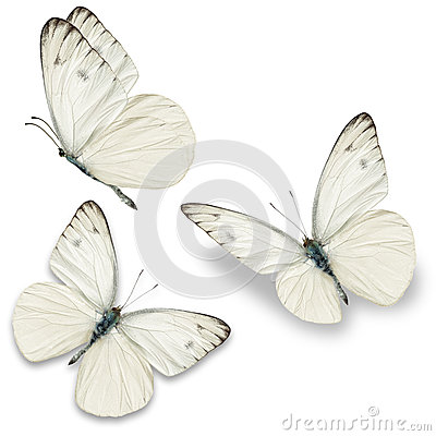 Free Three White Butterfly Royalty Free Stock Photo - 54289125