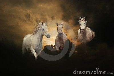 Three white horses sunset