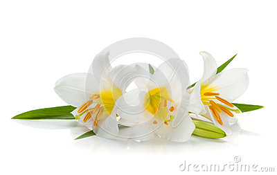 Three white lily