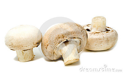 Three white mushrooms