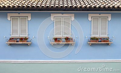 Three windows with cranesbills