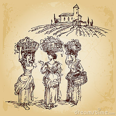 Three women harvesting grape