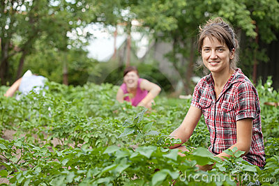 Three Women Working In Field Royalty Free Stock Photo - Image: 20838155